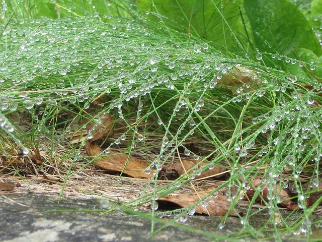 Regndroppar på gräs